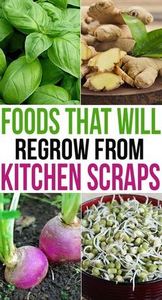 Foods That Will Regrow From Kitchen Scraps Today, we are going to take a look at the most easily grown food items which can be developed just out of seeds and leftover scraps which are usually just thrown out. Edible Garden, Easy Garden, Garden Ideas, Mint Garden, Garden Works, Edible Plants, Edible Flowers, Outdoor Plants, Garden Plants