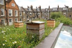 justin bere house green roof bee hives 1.JPG (1900×1267)