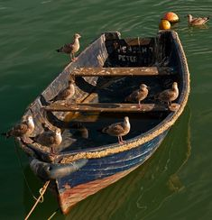 the sea gulls have taken over this old boat