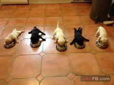 Mouth says eat, feet says no. puppies, anim, funni, pet, cuti, babi, ador, dog, thing