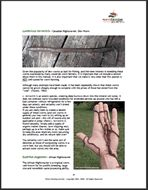 """The Business & Biology Of Raising Earthworms 112 pages    A step-by-step """"how to"""" guide written by two professional worm farmers with over 12 years experience."""