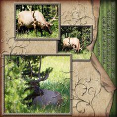 Digital Scrapbook Design - Elk in Yellowstone National Park