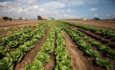 El Gobierno valenciano comienza a notificar las ayudas a la instalación a 210 jóvenes agricultores