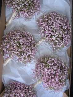 pink gypsophila wedding - Google Search. I like this a lot.