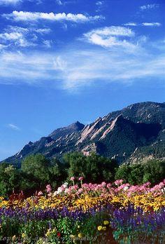 Flatirons and Flowers, Boulder, Colorado