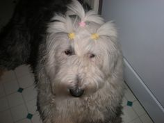 HOW AN OLD ENGLISH SHEEPDOG SAVED MY LIFE :: Suzee Branch