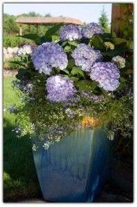 I love hydrangeas.  They are so pretty!