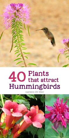 There are many different flowering plants you can add to your garden or balcony to attract and nourish these beautiful birds. Hummingbirds, like bees and butterflies, are essential pollinators for the garden. Empress of Dirt Diy Garden, Dream Garden, Lawn And Garden, Garden Projects, Garden Landscaping, Shade Garden, Hummingbird Flowers, Hummingbird Garden, Hummingbird Food
