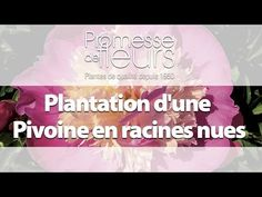 Promesse de Fleurs - YouTube Comment Planter, Gardening, France, Make It Yourself, Boutique, Gardens, Fall Planters, Planting Flowers, Grow Tomatoes