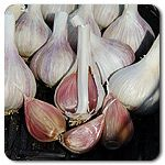 Organic Purple Glazer Garlic for this fall