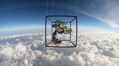 Here's a bonsai tree on its way to space, not something you see every day!