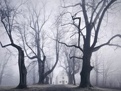 Eerie, Wild Scenes Straight Out of Grimm's Fairy Tales | Avenue in Lower Bavaria, Germany. | Credit: Photo: Kilian Schönberger | From Wired.com