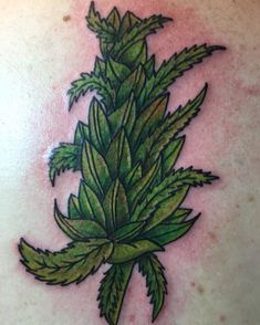 Weed Tattos Photos and Art Ideas. We Select Only Best Weed Tattoos for You! Weed Tattoo, Marijuana Art, Plant Tattoo, Marijuana Plants, I Tattoo, Old School Tattoo Designs, Best Tattoo Designs, Dream Tattoos, Tattoo Ideas