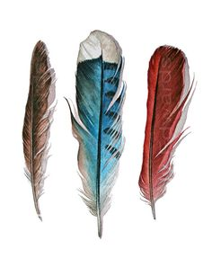 Three Feathers : Robin, Blue Jay, Cardinal - Archival Quality Print - - by Jody Edwards Jay Feather, Feather Art, Feather Design, Feather Tattoos, Bird Feathers, Arches Watercolor Paper, Watercolor Feather, Feather Painting, Watercolour