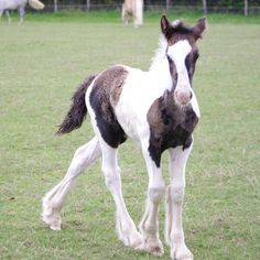 Tinker foal in landscape Most Beautiful Animals, Beautiful Horses, Beautiful Creatures, Animals And Pets, Baby Animals, Cute Animals, Reptiles, Pinto Horses, Miniature Horses