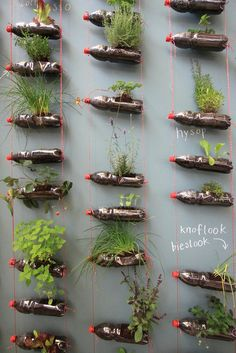 hanging herb garden, brilliant idea for small spaces....maybe paint the bottles for a bit more personality and visual appeal