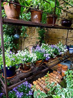 ガーデニング用品を収納しておくシェルフに、鉢植えのお花を飾っておくと、それだけで華やかな雰囲気に。