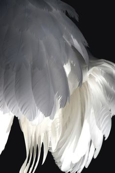 Angel Wings Angel Message Close your eyes and visualize our wings wrap around your heart and around your shoulders Feel the love and receive the blessings Love your guardian Angel. Black Angel Wings, Black Angels, White Wings, Angels Among Us, Angels And Demons, Anime Angel, Seraph Angel, The Wicked The Divine, Winter Typ