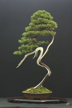 ☼●Your #bonsai inspiration for today!☼֍       #BonsaiInspiration