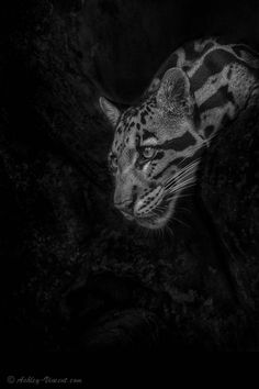 """The Cave DwellerbyAshley Vincent. """"This is one... 