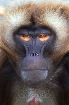 you can't be serious bro baboon