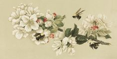 Vintage drawing of a trio of honey bees and flowers. White and red blooms on a cherry tree branch has attracted the bees. Piece by Olive A. Whitney.