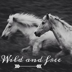 IG: @Square Whimsy | Run with the horses.  #horse #blackandwhite