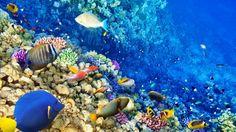 El Mundo Submarino Arrecifes De Coral