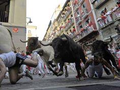 Bull Stampede