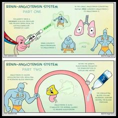 Easy way to learn the function of renin-angiotensin system.