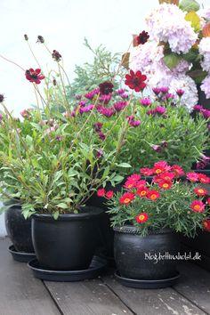 Blog Bettina Holst DIY - paint your pots