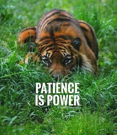 Patience quotes and sayings TOP PATIENCE quotes and sayings : Patience is power. Tiger Quotes, Motivacional Quotes, Lion Quotes, Boss Quotes, Attitude Quotes, Wisdom Quotes, Great Quotes, Qoutes, Patience Citation