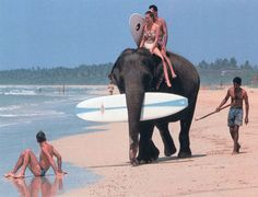 Surf in Sri Lanka and you can get an elephant to carry your surf board!