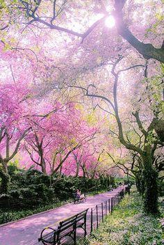 Árvores com folhas pink!