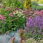 Low Maintenance Perennial Garden