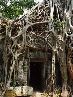 Ta Prohm, Cambodia, 12th century
