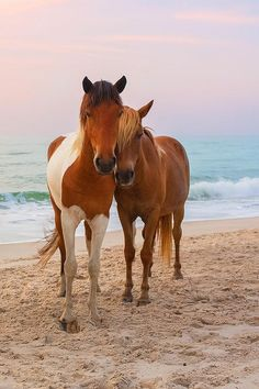 "Lisa Kramer said, ""Doing a series on these wild horses,"" http://fineartamerica.com/profiles/lisa-kramer.html. On Assateague island, large populations of beautiful, wild horses roam free. Maryland There are so many tributes to man-made things in Maryland; perhaps that very fact is what makes the Chincoteague ponies on Assateague Island the thing we love most in the state."
