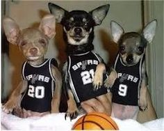 Chi basketball team -- would be cuter in Celtics uniforms. :)