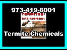 Professional Pest Control Services Contractors In Delhi Noida Gurgaon