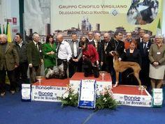In 5000 hanno partecipato alla 52esima #Expo Canina #Enci, in #FieraMillenaria a #Gonzaga.  A vincere è stato un #cane di razza Barbone miniatura di proprietà di Bruno Nodalli di Saronno (Varese).