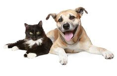 Happy National Pet Day! 'Why We Love Cats and Dogs' is available online
