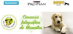 Concurso fotográfico Mis Queridos Animales #concurso #animales #mascotas #Maskokotas #perros #gatos