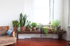 Green and ecological home: spaces full of green | Getting married is a cheap - Wedding Blog