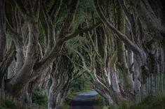 10 breathtaking tree canopies - the dark hedges in Northern Ireland.