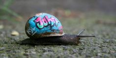 Graffiti snails roaming London as part of slow moving art project
