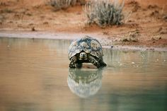 Animal Pictures, Turtle, Wildlife, Africa, Park, Awesome, Travel, Animals, Turtles