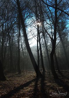 A photo early in the morning in woods very close to my house