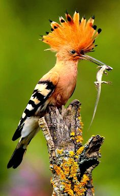 The most beautiful bird images, you can find here for free and cheap.