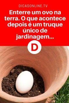 Incrível!!!! Veja! Enterre um ovo na terra. O que acontece depois é um truque único de jardinagem…