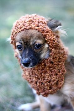 ewok dog hat.